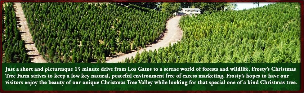 how to start a christmas tree farm business