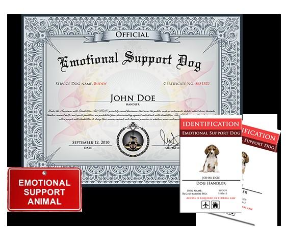 emotional support dog basic kit