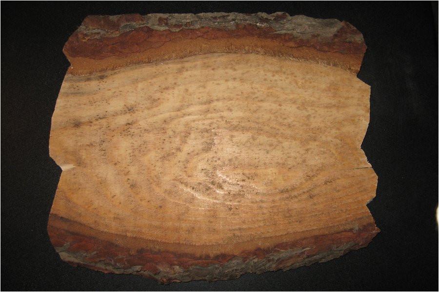 search q antler plaque patterns form restab