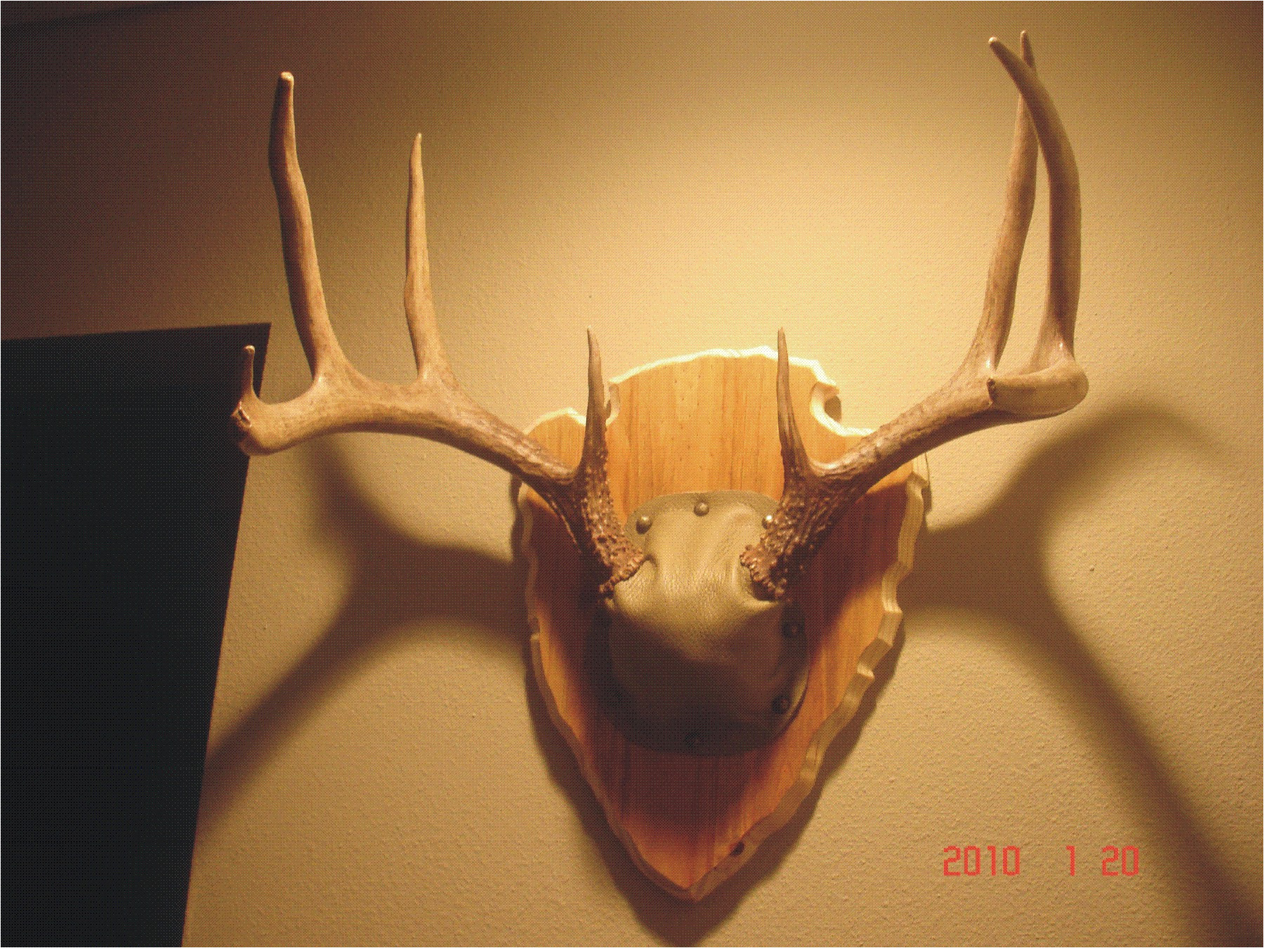 antler plaque do it yourself