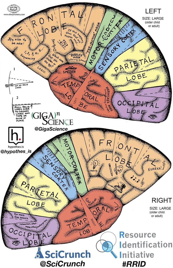 Brain Hat Template 110 Best Knit Brain Hat Patterns Images On Pinterest