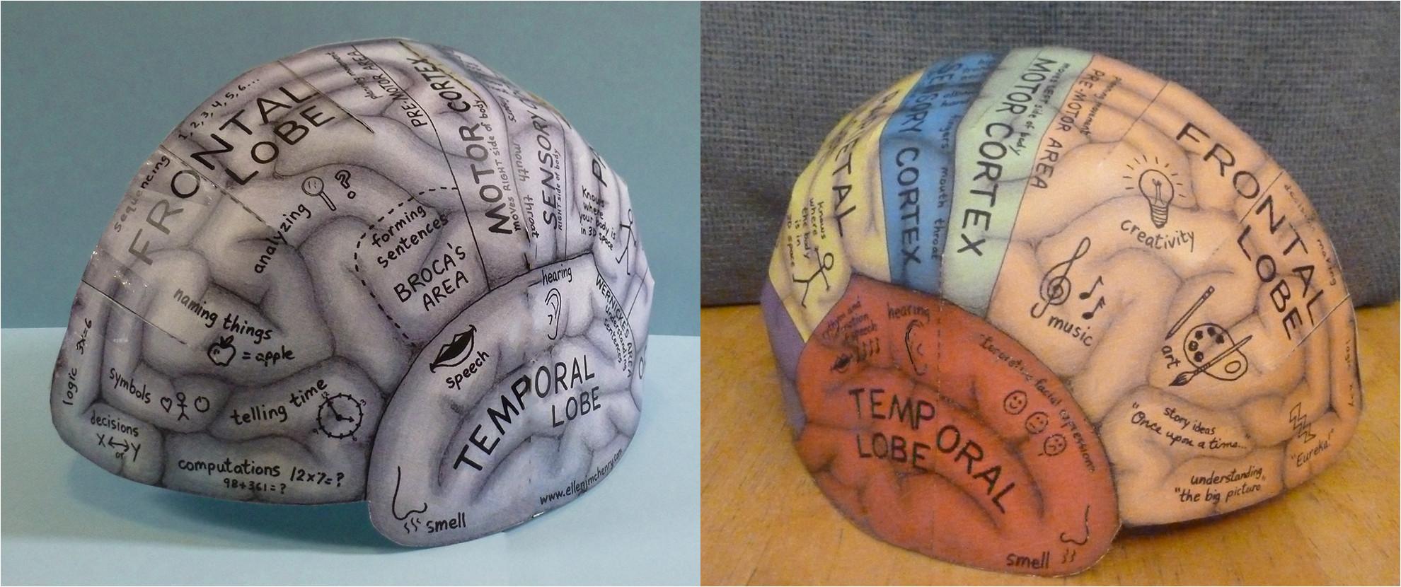 Brain Hat Template Brain Hemisphere Hat