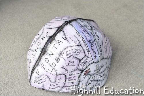 human body unit week 13 brain