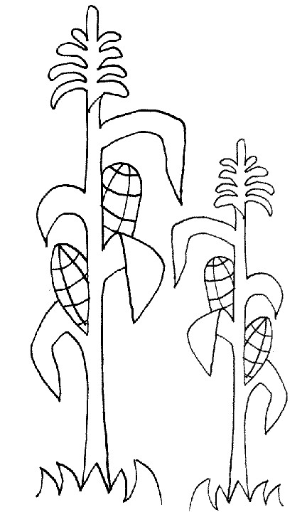 corn stalk coloring sheet