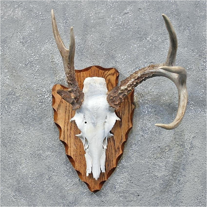 European Plaque Template Deer Horn Plaque Template Shapes Templates Skincense Co