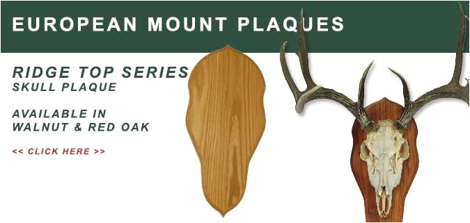 European Plaque Template European Skull Mount Plaques Skull Panels for Deer and