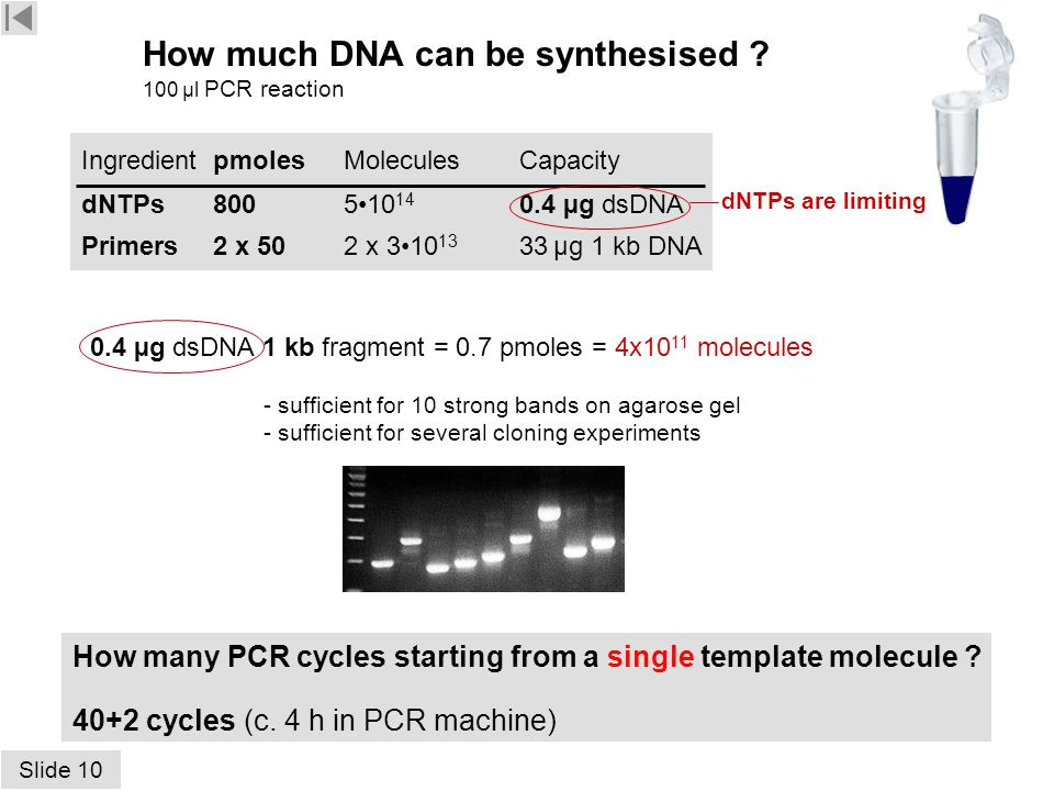 How Much Template Dna for Pcr Contents Hospital Pcr Gel Results Eppendorf Eb Gel K