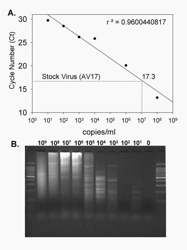 more inspired how much template dna for pcr trend