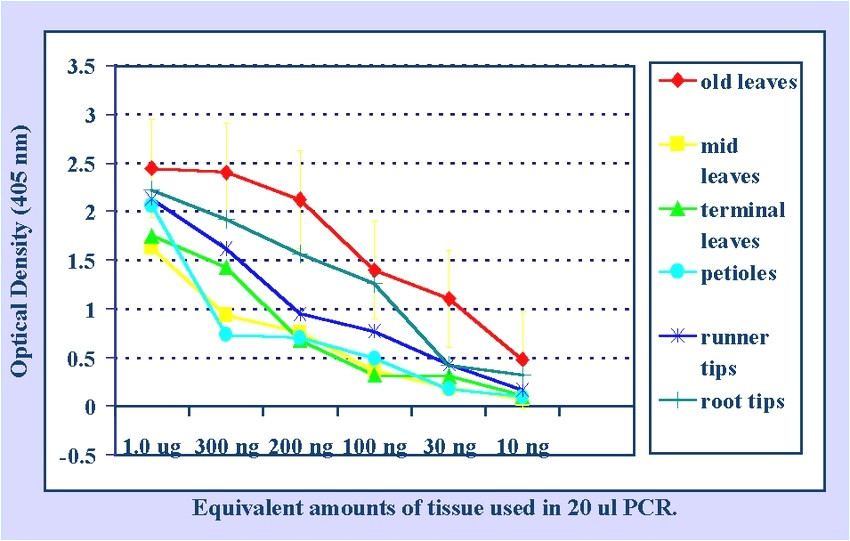 pcr product as template