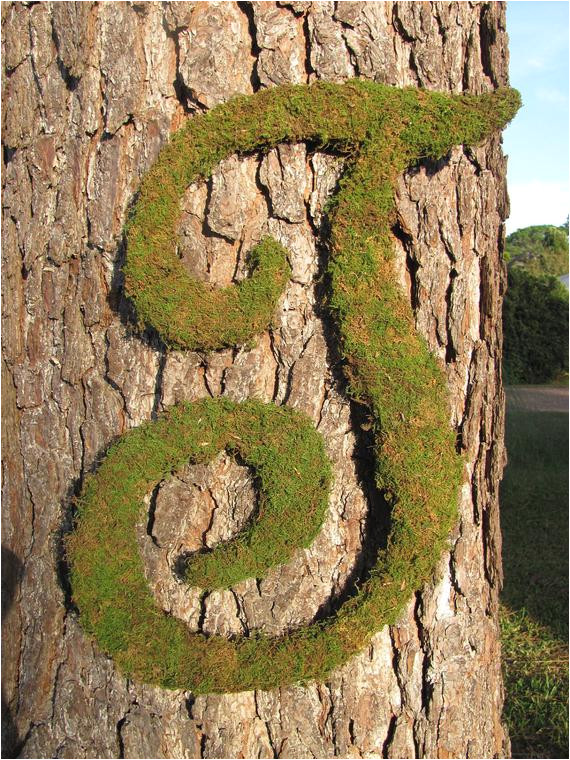 large wood letter t covered in moss
