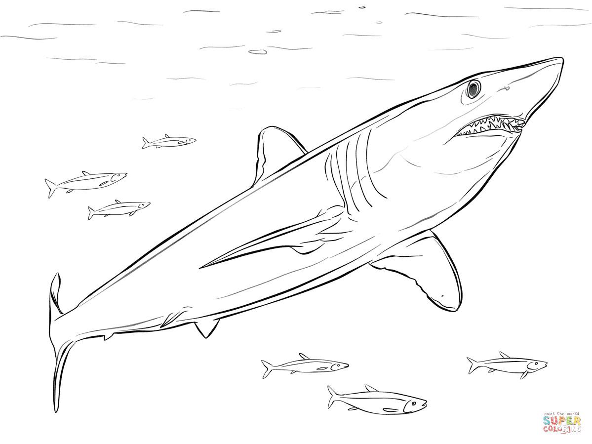 tiburon mako de aleta corta