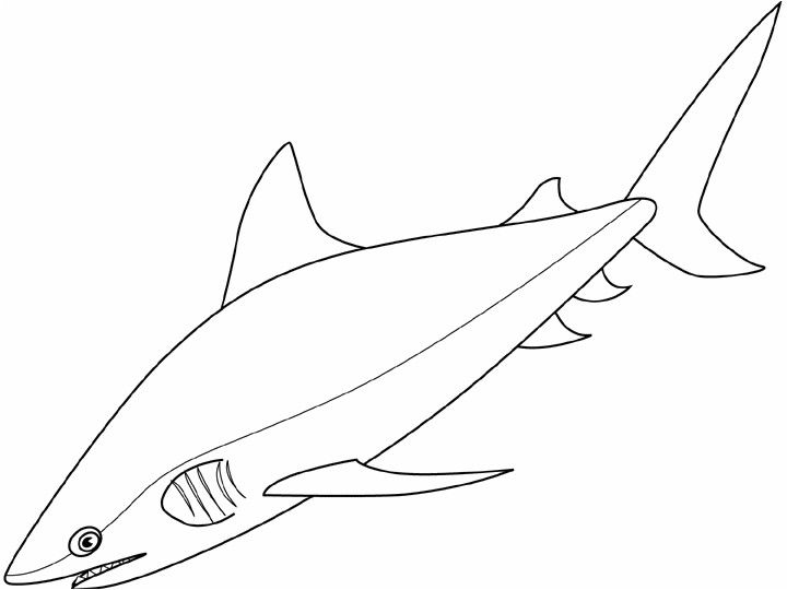 mako shark coloring