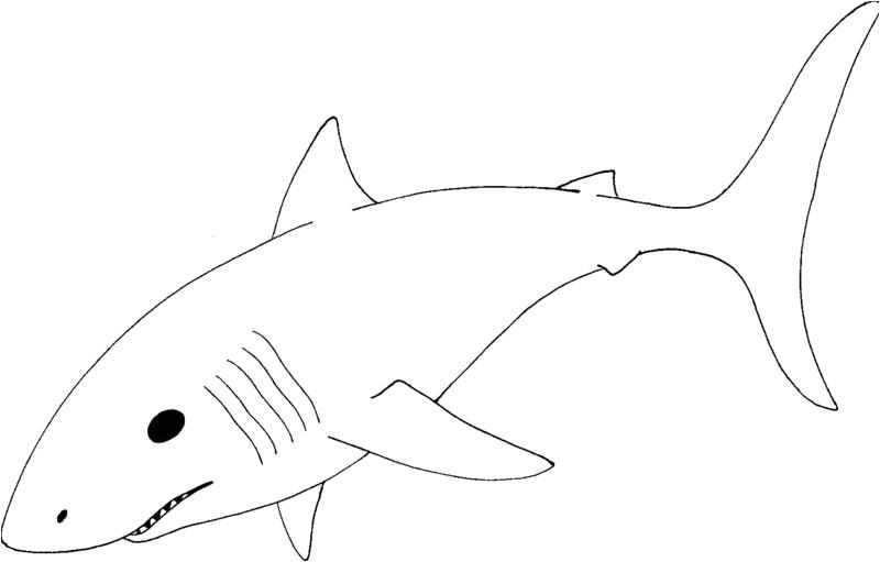 shark black and white 38140