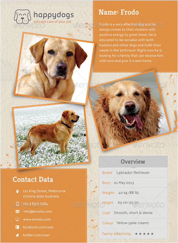 lost dog flyer template