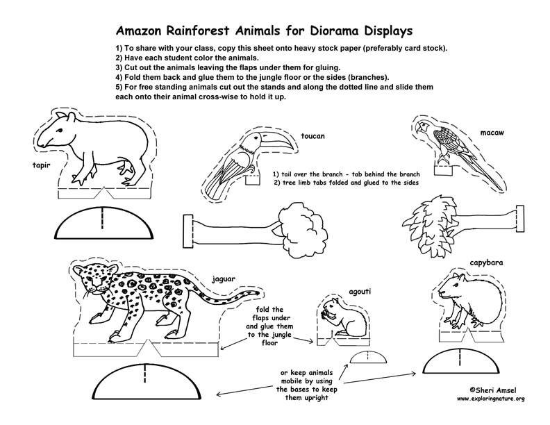 post rainforest animal template printables 322885