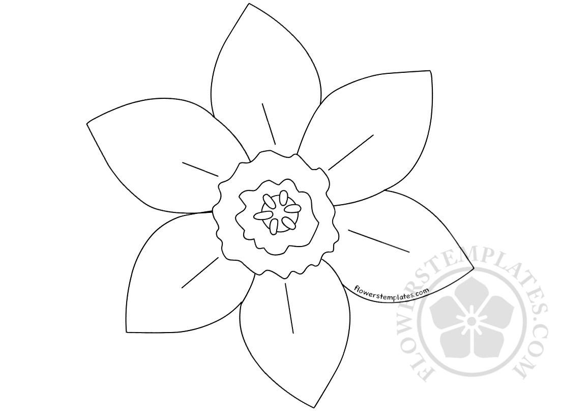 printed pattern daffodil