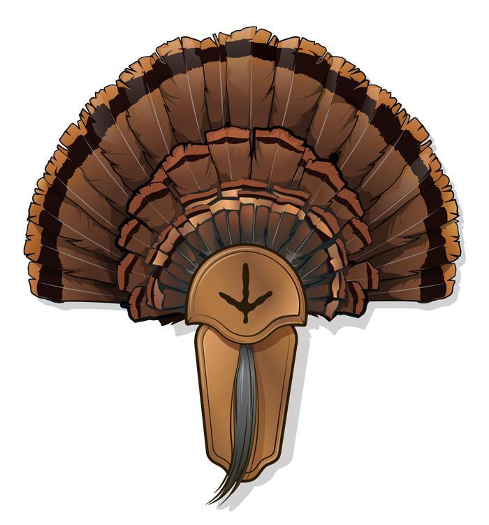 Turkey Fan Mount Template 5 Diy Turkey Taxidermy Projects