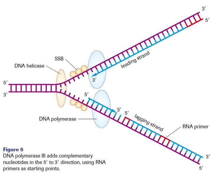 What is A Template In Dna Template Dna Http Webdesign14 Com