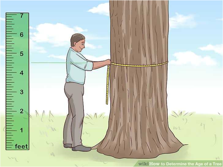 what is a tree trunk covered with 4 letters