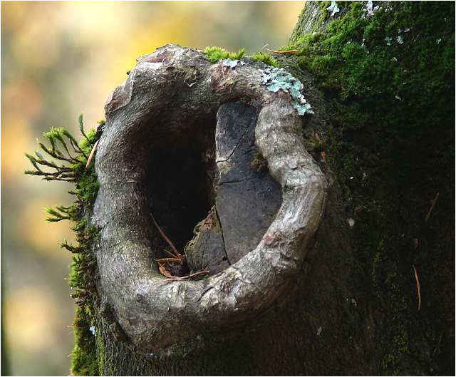 What is A Tree Trunk Covered with 4 Letters What is A Tree Trunk Covered with 4 Letters Free