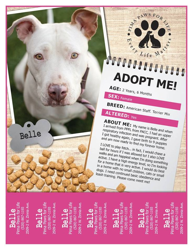 Adopt Me Flyer Template 36 Best Flyer Ideas Images On Pinterest Kitty Cats
