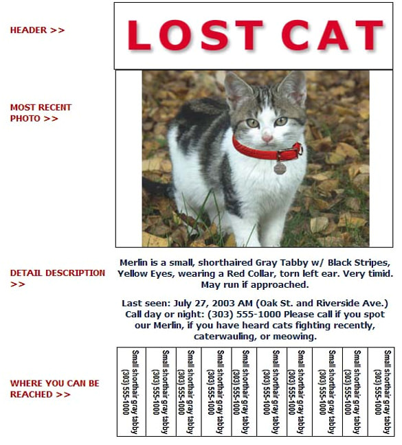 lost pet flyer
