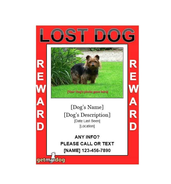 lost pet flyers