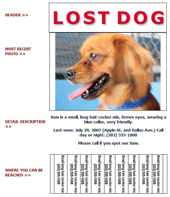 lost and found dog flyer