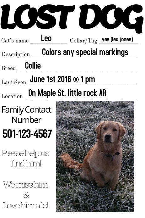 lost dog missing loved one family flyer template