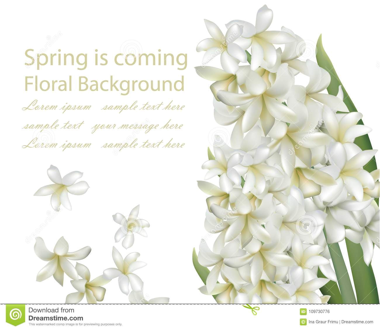 hyacinth white flower bouquet isolated background vector realistic spring coming card illustrations d illustration 109730776 jpg