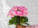 A National Flower or Plant Cue Card 83 Best Roses Images In 2020 Red Roses Send Roses Yellow