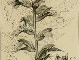 A National Flower or Plant Cue Card Eja Stockfotos Eja Bilder Alamy