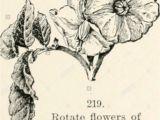 A National Flower or Plant Cue Card Kot D Stock Photos Kot D Stock Images Alamy