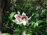 A National Flower or Plant Cue Card Shop Des Mitglieds Alanah