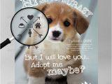 Adopt Me Flyer Template Animals Adopt Me Flyer 2 Dreamcase Digitaldreamcase