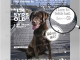Adopt Me Flyer Template Animals Adopt Me Flyer by Dreamcase Graphicriver