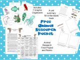 Animal Research for Kids Template the Book Bug Animal Research