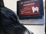 Border Crossing Card Que Significa Schulhund Kapta N Jack Mein Alltag Als Schulhund