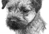 Border Terrier Thank You Card Image Result for Graphite Drawing Dog Border Terrier with
