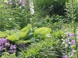 Card Your Yard Flower Mound 6182 Best Garden Pictures Images In 2020 Garden Plants