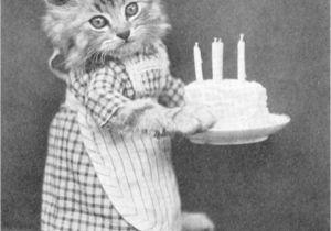 Cat Singing Happy Birthday Card 256 Best Birthday Cards Images Birthday Humor Birthday
