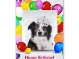 Cat Singing Happy Birthday Card Australian Shepherd Dog Balloons Crown Birthday Card