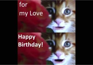 Cat Singing Happy Birthday Card Happy Birthday My Love From Cute Cats with Images