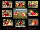Christmas Card Ideas with Dog My Future Christmas Cards Corgi Christmas Cards Cute