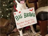 Christmas Card Ideas with Dog Pin On Boxer Dogs