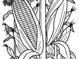 Corn Stalk Template Fruits and Vegetables Cornstalk In the Corn Field