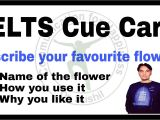 Describe A Flower In Your Country Cue Card Red Rose Flower Cue Card