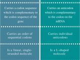 Difference Between Template and Coding Strand Difference Between Mrna and Trna Structure Function