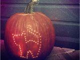 Drill Pumpkin Templates 1000 Ideas About Cat Pumpkin Carving On Pinterest Cat