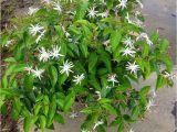 Jasmine Star Email Templates Jasmine Star Plantant Com